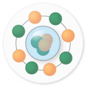 図1 殻模型。原子核の中心に陽子と中性子の塊(ピンク部分)があると仮定し、その周りを陽子(オレンジの球)や中性子(緑の球)といった核子がグルグルと運動しているモデル。原子核内を陽子や中性子が比較的自由に運動できることから、全体を液滴と近似することができる。