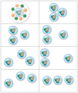 図2 炭素12原子核のアルファクラスターモデル。陽子2つと中性子2つからなるアルファ粒子(ヘリウム原子核)3つで炭素12の原子核が構成される。左上は殻模型と同じ状態。アルファ粒子3つが同じ場所で重なり合った特殊な形と考えられる。アルファクラスターモデルはシェルモデルにくらべると広がっており、密度が低い。殻模型が液滴に近似されるのに対して、アルファクラスターモデルは気体に近似できる。