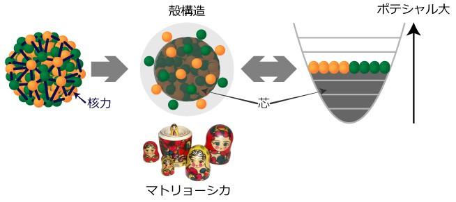 図3:殻模型 原子核は核子どうしが核力により全体を形作っている。核力の性質は複雑だが、原子核は殻の構造の中に核子を詰めていったものとする殻模型を使うと、原子核の多くの性質が理解できる。殻構造を核子全体がつくるポテンシャルのくぼみの中に核子が閉じ込められた状況として、殻構造を計算するのが殻模型計算。