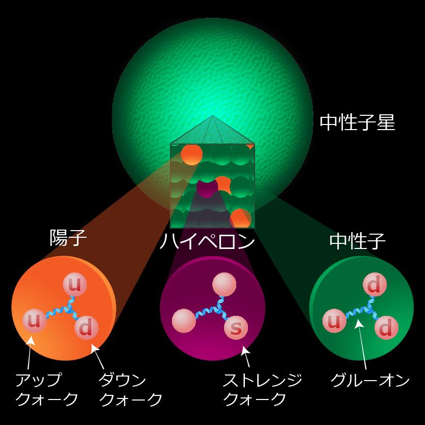 中性子星内部のハイペロン