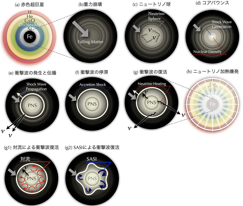 図1:ニュートリノ加熱説による超新星爆発のシナリオ